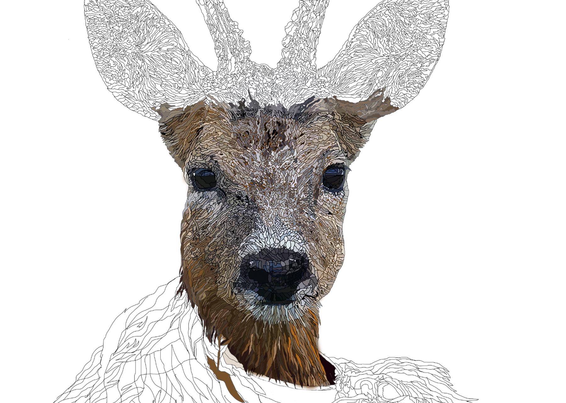 Line Drawing Deer : Deer family silhouette animal silhouettes fawn doe