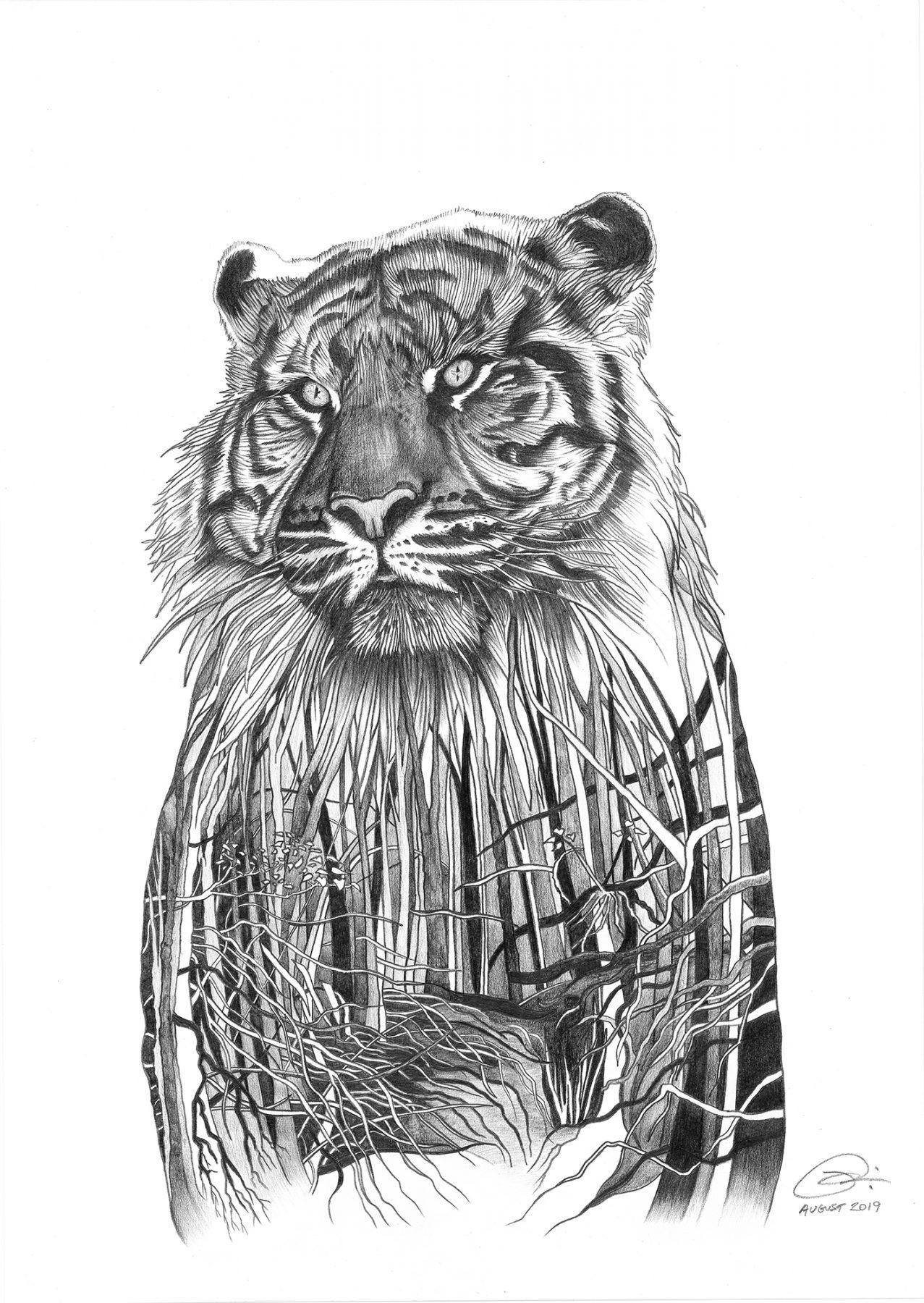 Sumatran tiger drawing