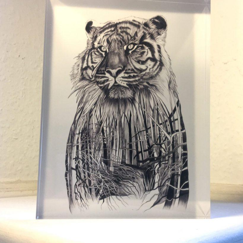 Sumatran Tiger - Acrylic glass block
